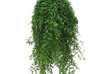 Planterr