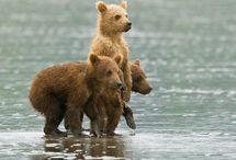 Bears & Other Cuties