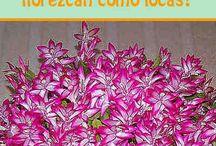 Jardín flores