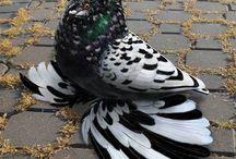 păsări superbe