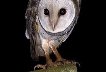 Owls / Photos of owls