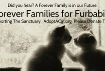 "Forever Families for Furbabies / What better way to acquaint you with a worthy cause. Forever Families for Furbabies is a ""close to your heart"" community awareness for homeless, abandoned and medically needy #kittens   and adult #cats  .  Please join me in this mission.  Saving one life, a day at a time.  https://www.facebook.com/foreverfamilyfurbaby Please pass the word. If you can't donate, please LIKE or SHARE. A click cost nothing.  Thank you!  / by Native By Designz"