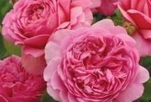 Flowers / by Jennie Hogan