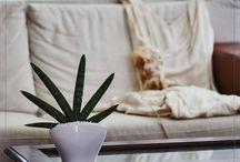 Bomboniere matrimonio / Bonsai, succulente, sansevierie e altre piante grasse e tropicali di Paganopiante per rendere speciale il tuo matrimonio.