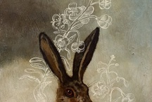 hares from sky