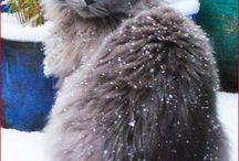 SnowCats!
