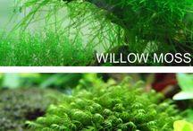 Plant Aquariums
