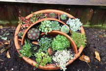 My little garden/ green hands / Little ideas