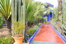 Marrakech en de tuinen van duizend en één nacht / Marrakech is sinds oudsher een smeltkroes van culturen en dat is in deze dynamische stad nog steeds terug te vinden. Paleizen, moskeeën en andere historische gebouwen verwijzen naar de voorbije geschiedenis. En als er paleizen en moskeeën zijn, dan horen hier onlosmakelijk tuinen bij, waarover in de talrijke sprookjes wordt verhaald.