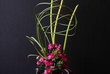 Ikebana / by Jukka Heinonen