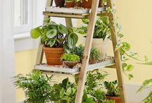 House plants and plant stands