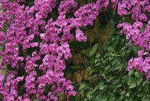 Inspiring Orchids