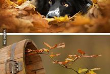 Autumn, my best season / Magical autumn