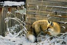 Fotos - Tiere-/Vögel / Schöne Fotos von Verschiedenen Fotografen