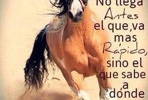 caballos frases