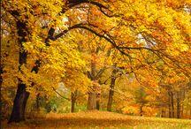 Colori, natura, paesaggi