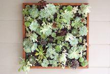 Gardening / by Chrissy Burton