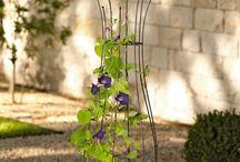 My garden ideas / Gardens, pots