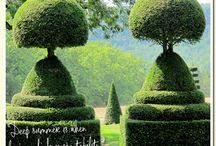 Topiary ⓛⓞⓥⓔ / Love them. Collect them.  / by Jennifer Unsell