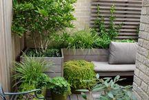 Petit jardin et balcons