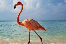 REF: Birds, Wild