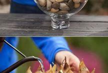 Løk/knollplanter