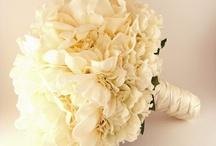 Wedding / by Kailey Morgan