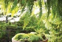 Jardins e reciclagens