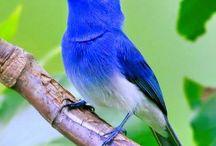 BIRDS - SINGING