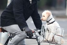 Cicloturismo: friends / PET and bicycle