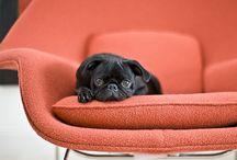 I love dogs / by Lynn Novak