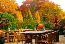 herfst / kleurenpracht