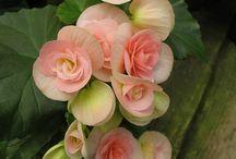 A - Flowers / by Betsy Pedersen