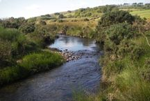 Fly Fishing on Dartmoor and South Devon Rivers / Fly fishing for wild brown trout on Dartmoor and South Devon Rivers