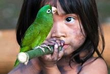 Guarani / www.xapiri.com curated board in reference to the Guarani indigenous people of Brazil, Argentina, Paraguay & Bolivia