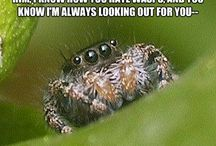 Spiders. I fucking love Spiders. / by Jason Caldwell