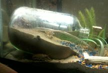 Salt water tanks / by Candice Busch