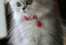 Sevimli kediler