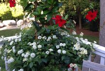 Good Gardens Container Plantings