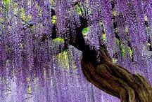 Árboles de maravilla