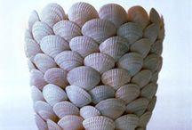 deniz kabuğu diy