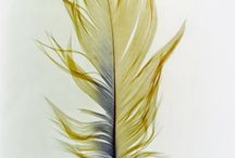Art ideas - Feathers