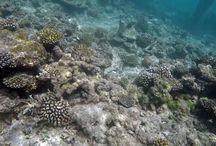 Maldivler Gezimizden kalanlar