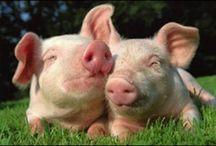 Animals - Pig / by Jennifer Holland