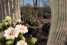 Flowerpower - Arizona