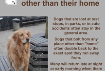Lost Dogs of Wisconsin Tips / by Kathy Pobloskie