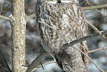 OWLS - Who .... Who / by ketadiablo
