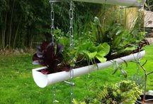 plantas e verduras