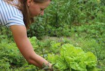 Zöldségfélék gondozása