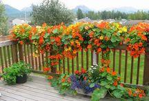 Railing Garden